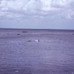 F 11, 58 - Strand ved Tiselholt 003